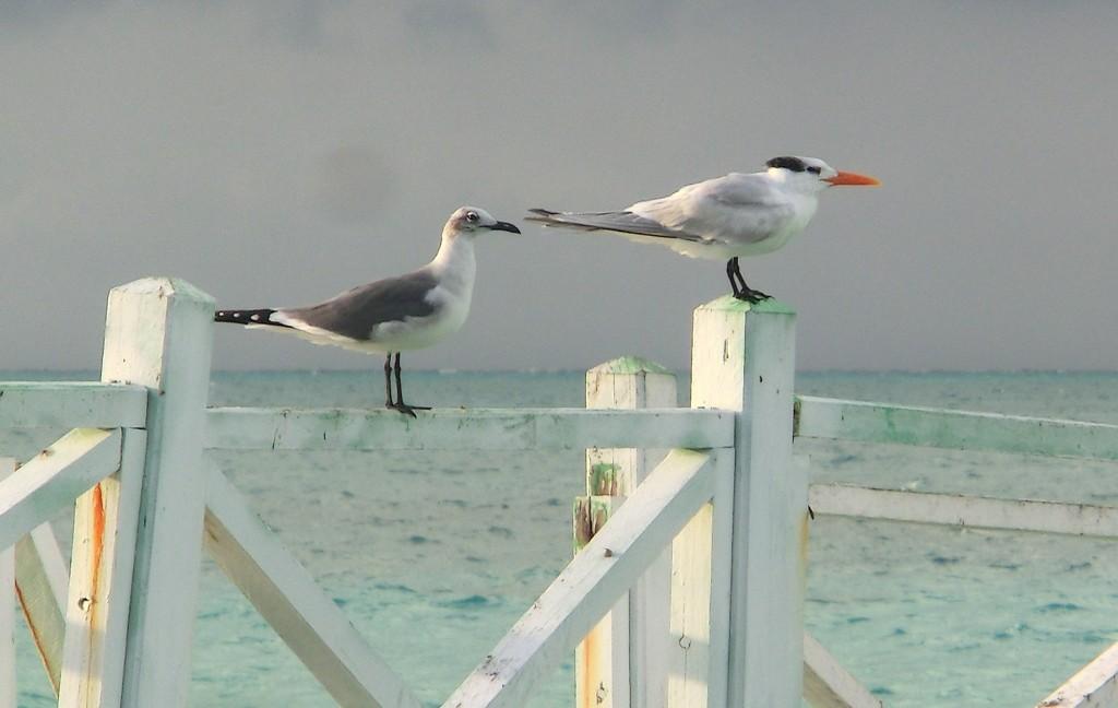 KubaVögel1